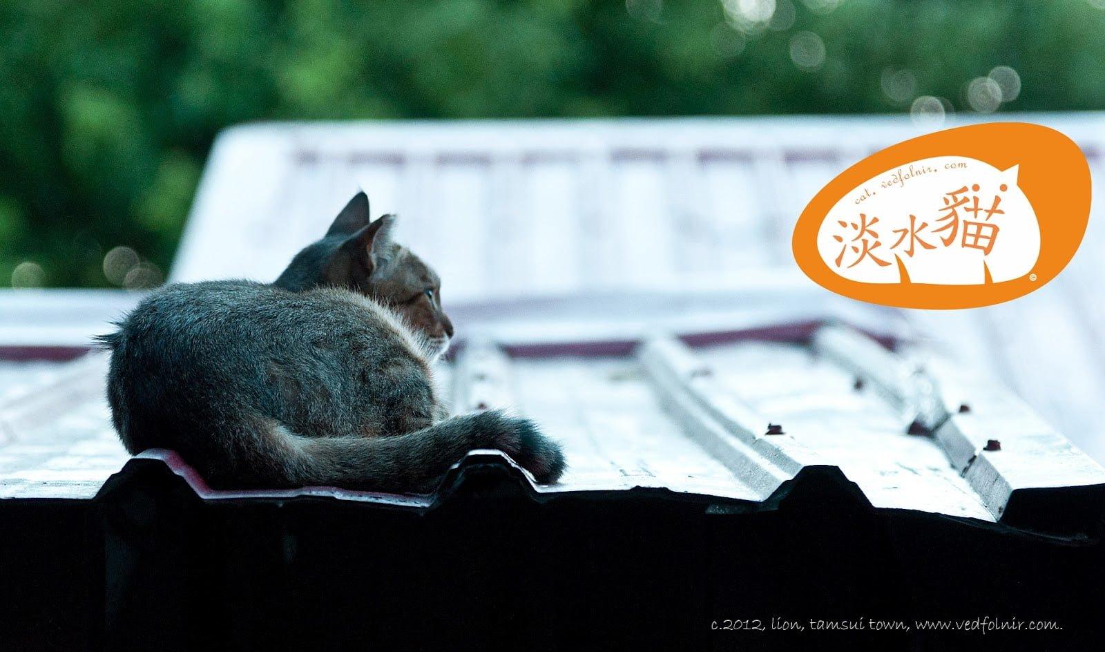 憂鬱的空氣 發呆的貓|淡水河岸停車場的百貓物語