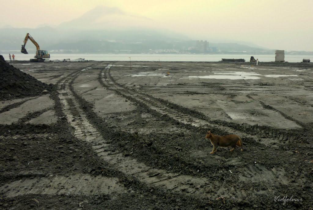 被摧毀的家 淡水老貓在工地現場尋找回憶|百貓物語