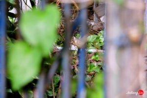 小巷秘境之大家一起來找貓咪|淡水清水巖祖師廟的百貓物語