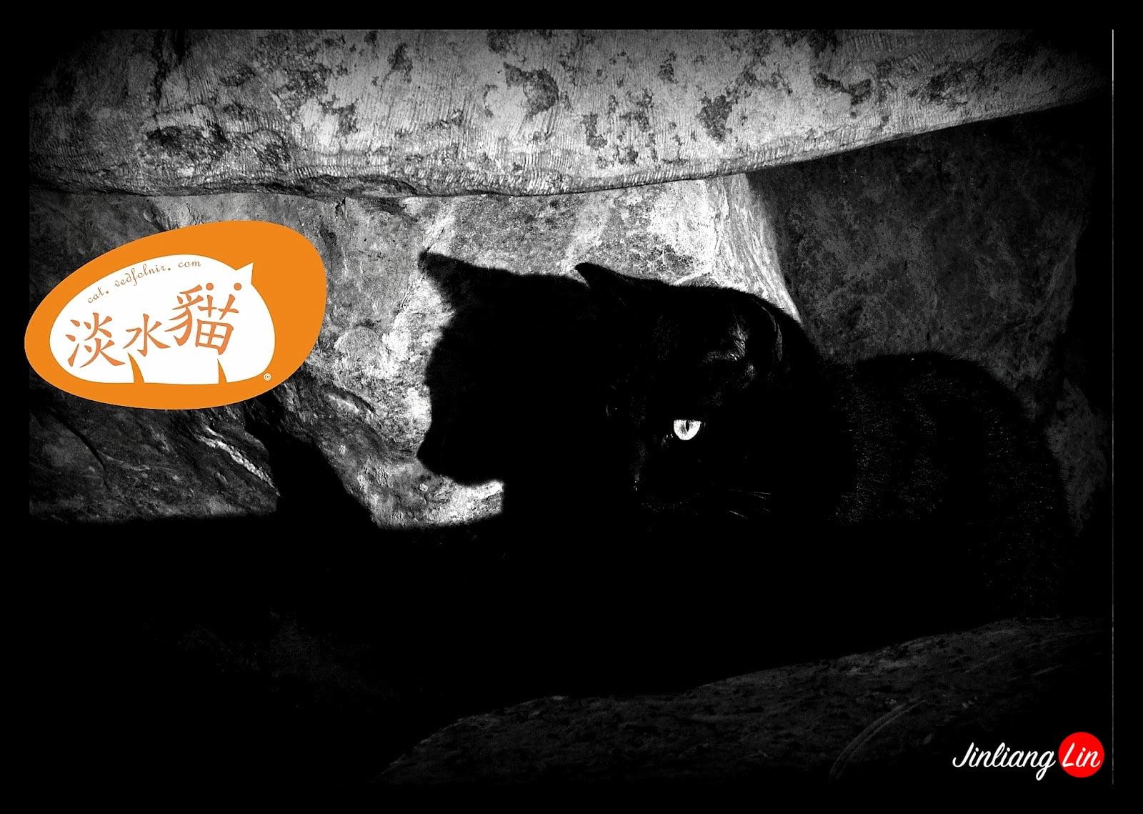百貓物語:淡水黑社會之神秘貓君