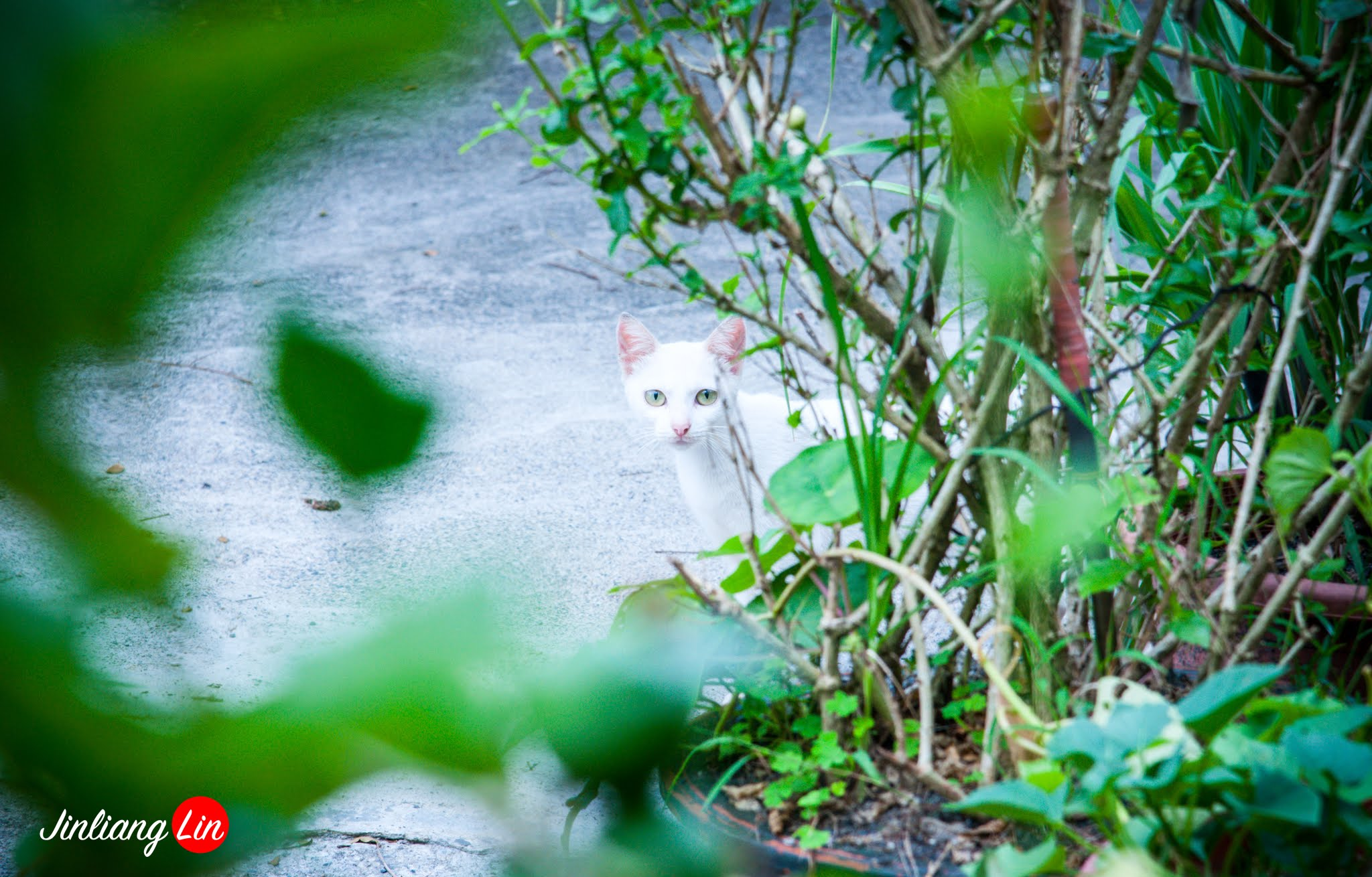 百貓物語:我在南投水里火車站的鐵軌上遇見一隻白貓