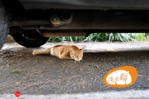 Tamsui Cat Orange Hide under Car 2012 1 1