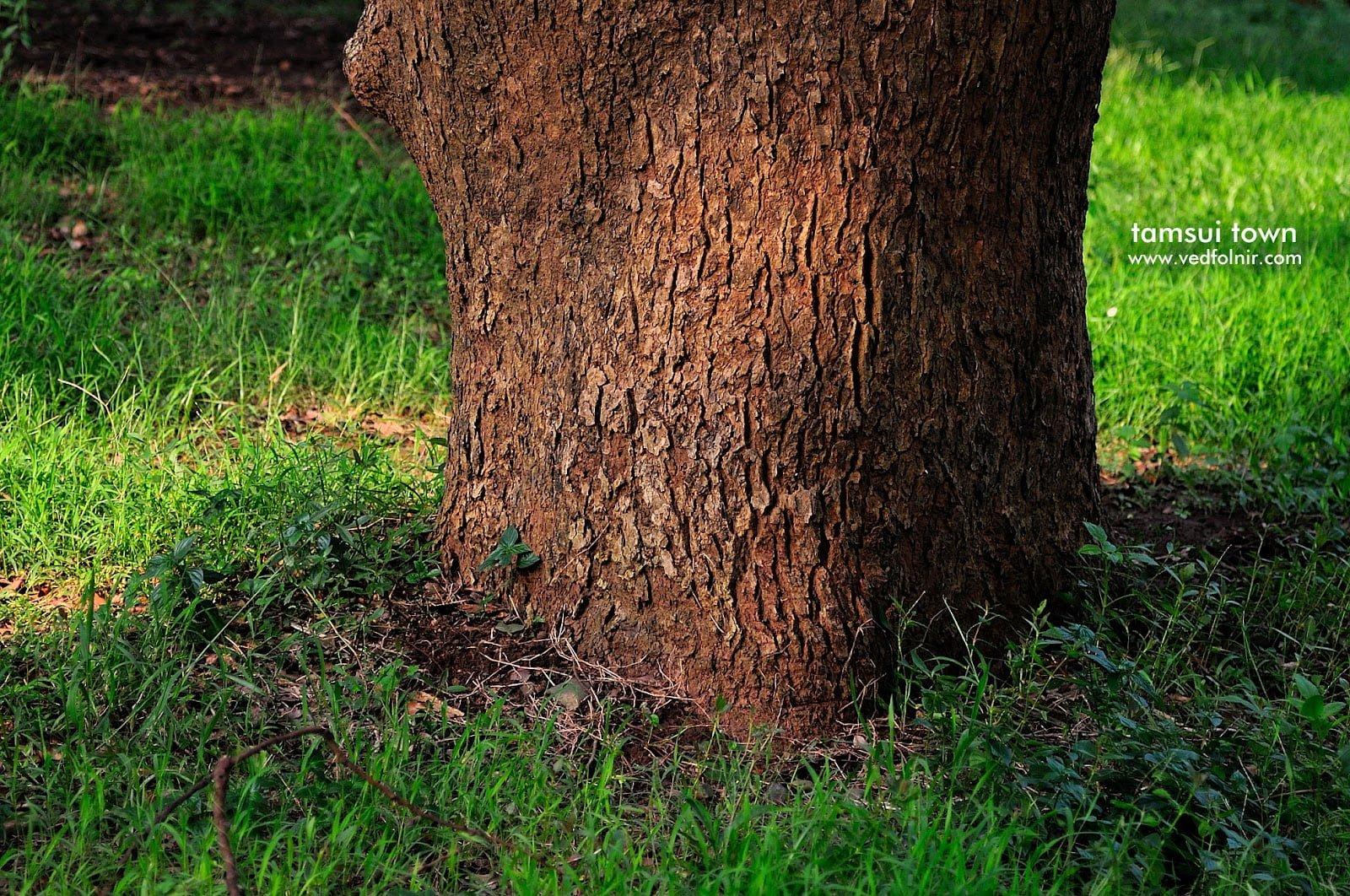 自然生命與樹|淡水宗烈祠|20120809