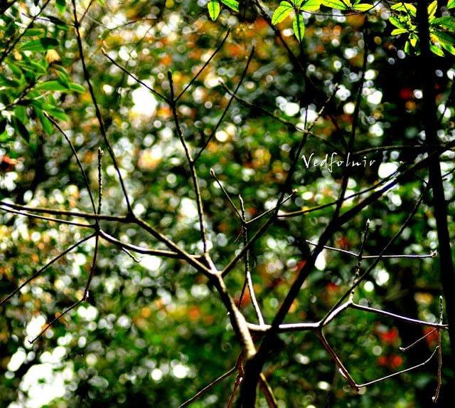 四月草木|淡水河岸|20110411
