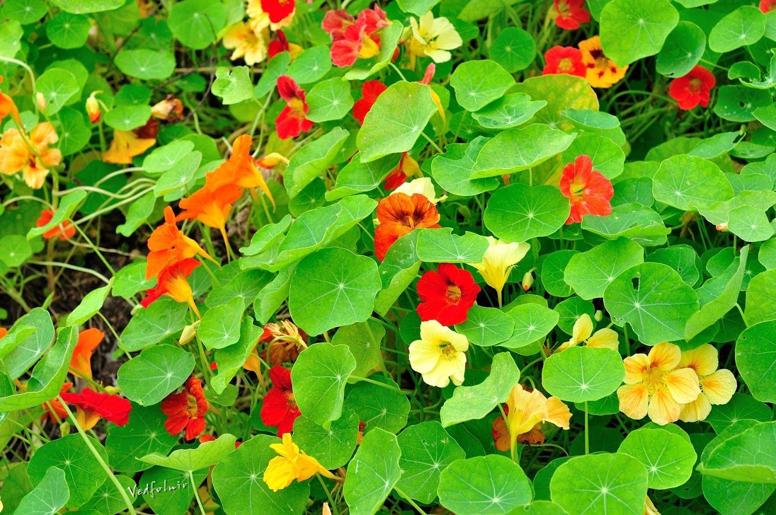 紅花、黃花和綠葉|臺北國際花卉博覽會|20110412