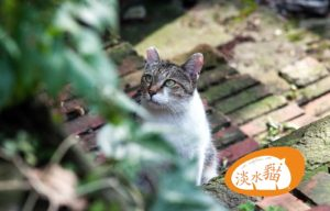 Tamsui Old Street Cats 201205 1 1 1