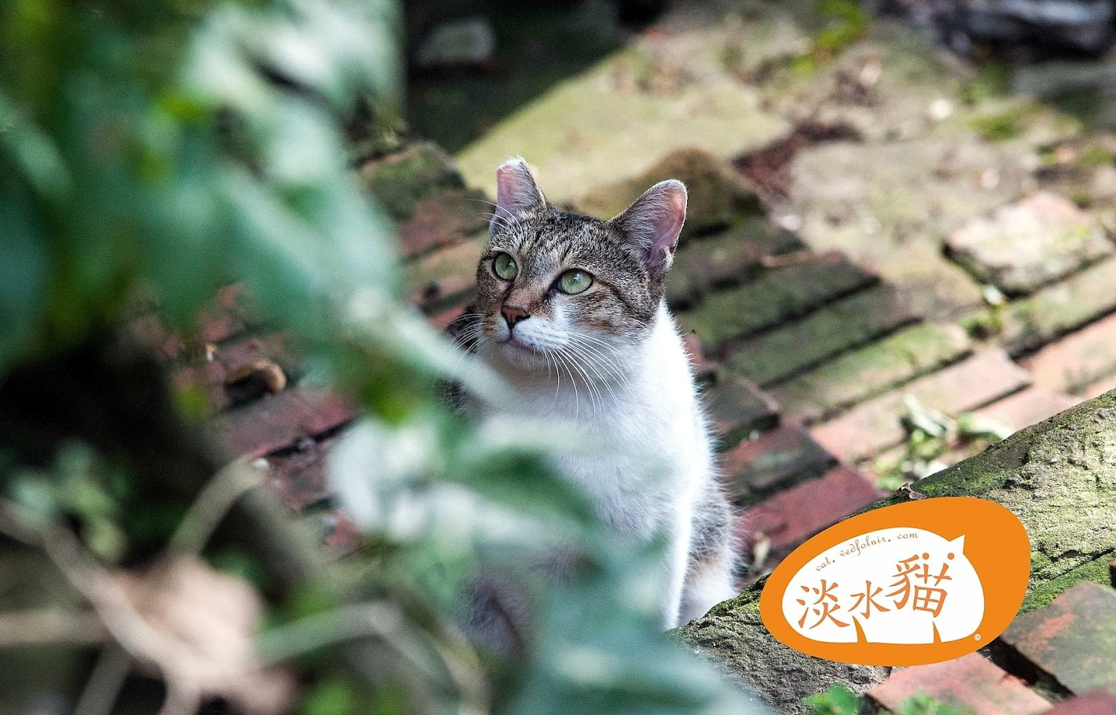 百年巷弄裡的貓|淡水老街的百貓物語