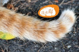 Orange Cats Tail in Tamsui 1 1