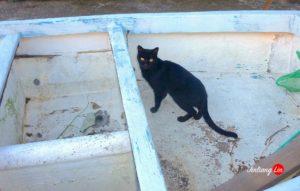 Tamsui River Street Black Cat in Ship Boat 20121115 1 1