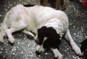R.I.P. 嘟比 DU-BI 我們家的寵物狗寶貝(198x-2002)