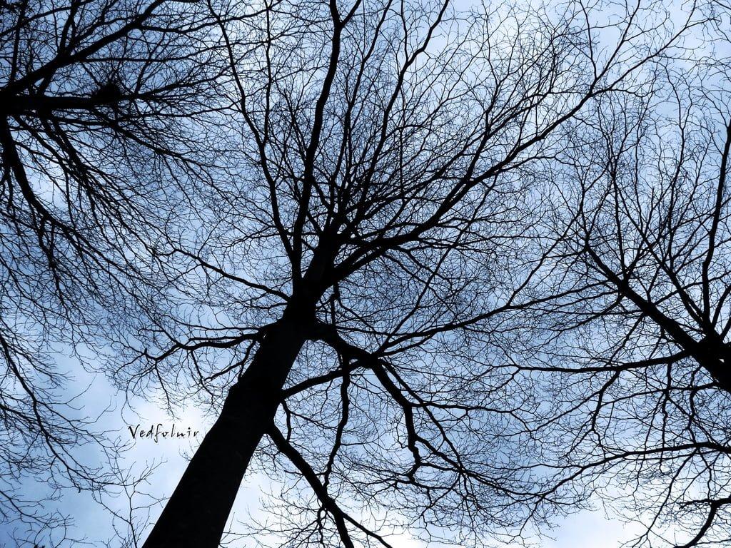 Tamsui Tree