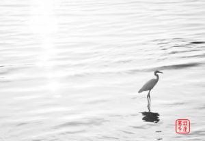 白鷺鷥無名/淡水河岸