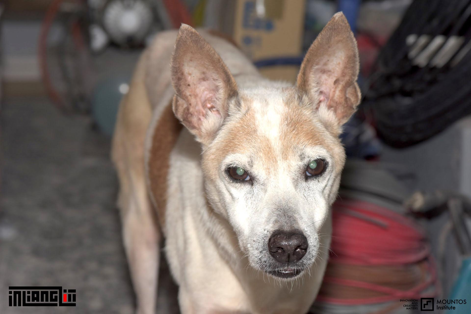 LU LU Dog Grandma Tamsui
