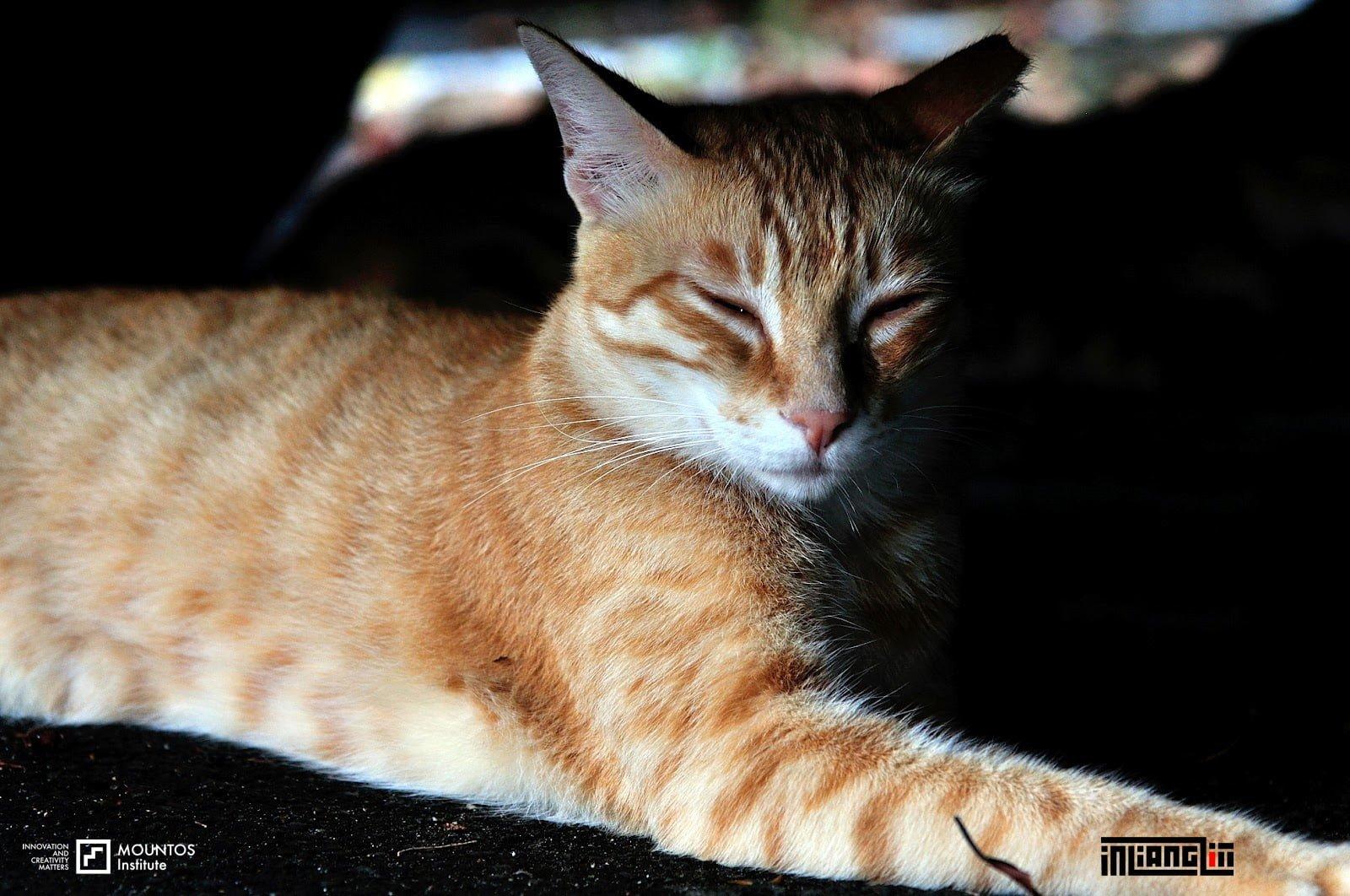 小橘貓瞇瞇眼不理人|淡水河岸停車場