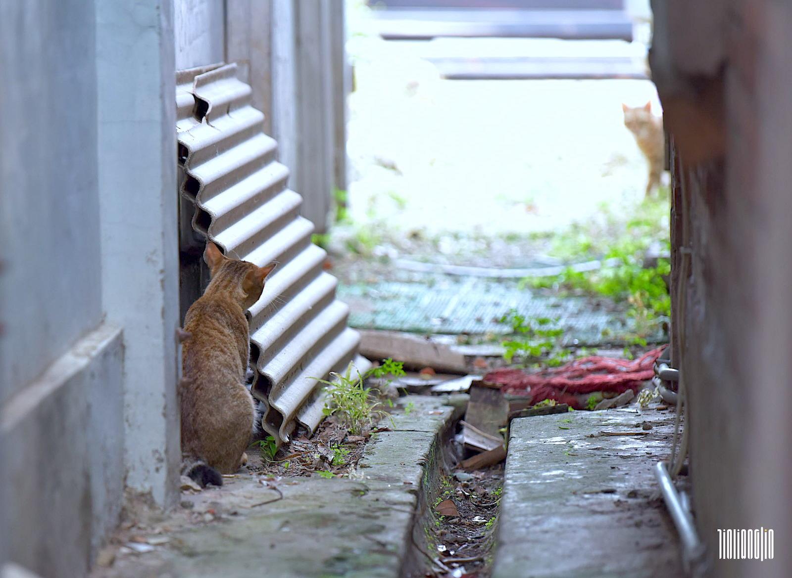 淡水河岸旁的雙貓間諜