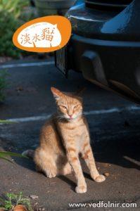 Tachibana tabby cat tongue tamsui street cat 百貓物語:淡水貓之小橘教你如何讓身材修長苗條