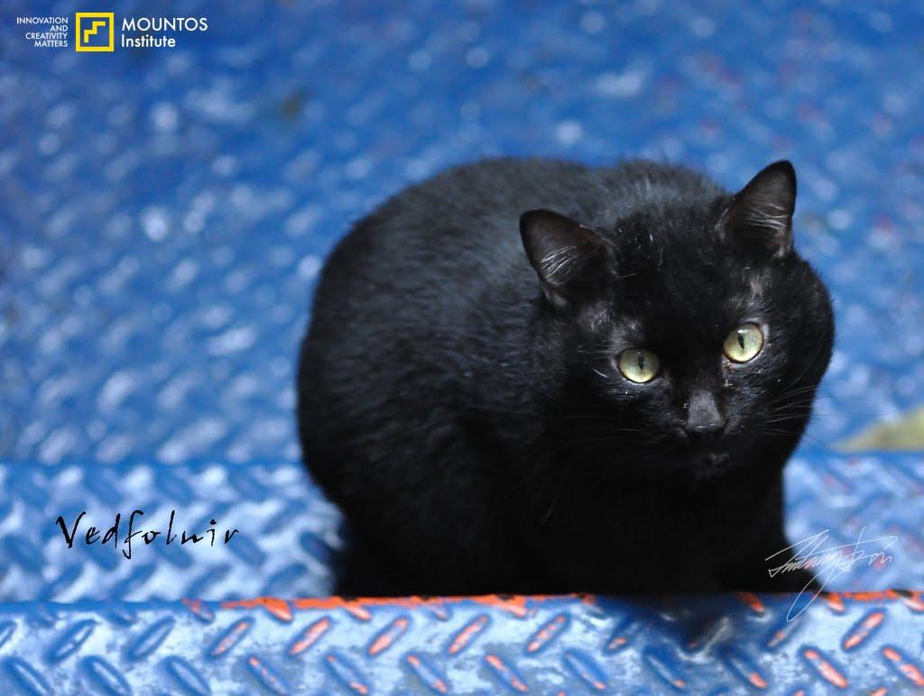 Black Cat eye iron Stairs 11