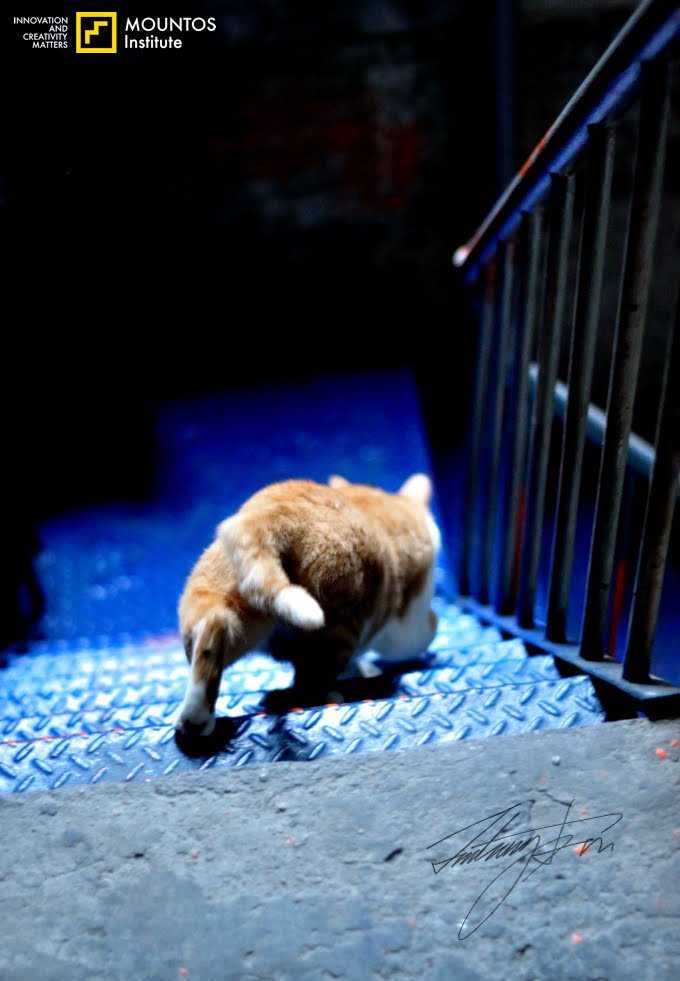 Cat Orange Tamsui Down the iron stairs 9