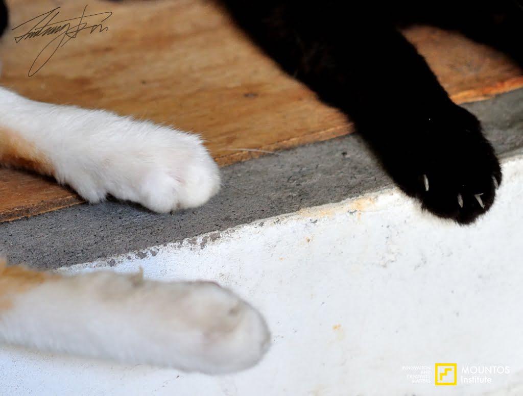 Cat Orange and Black Bean foot Tamsui 3
