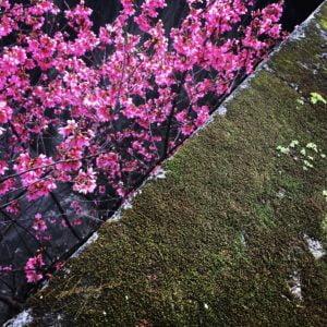 粉櫻紅與青苔綠