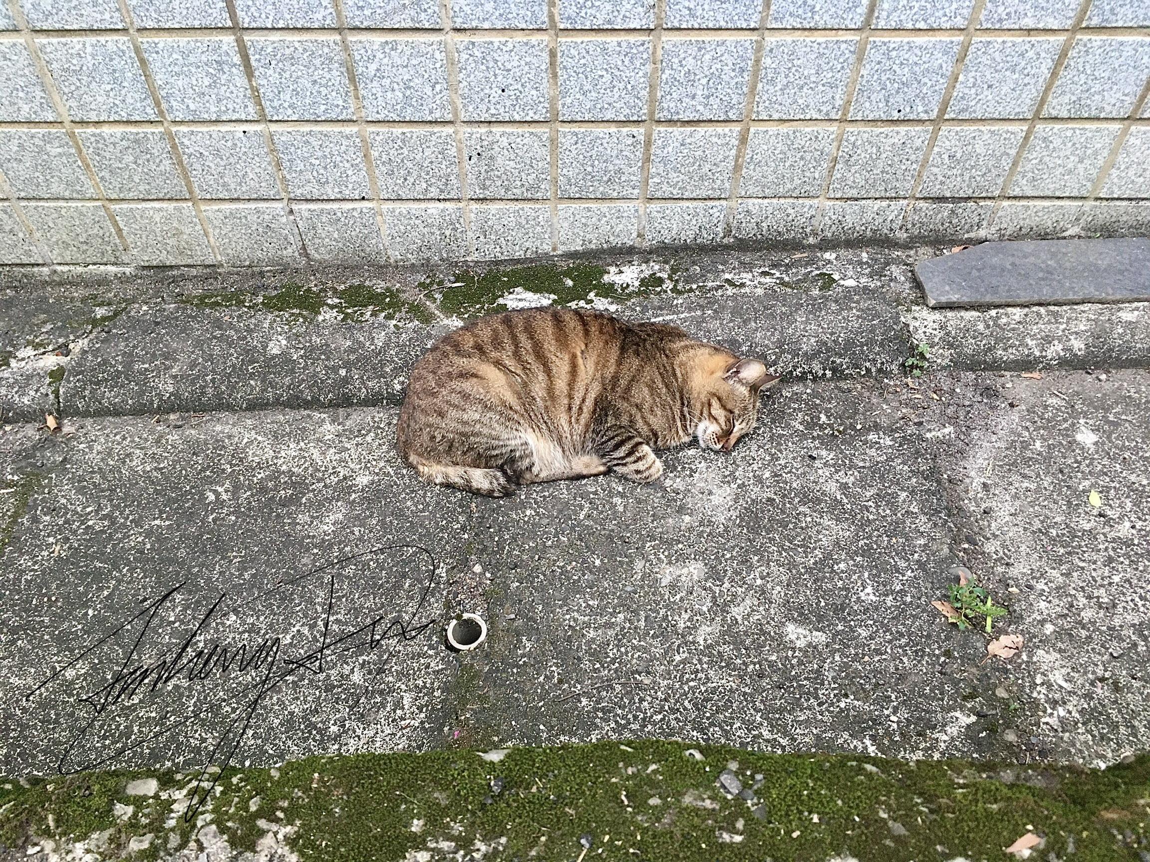 貓蟲丨淡水老街